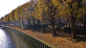 afbeelding van herfst in Sloten
